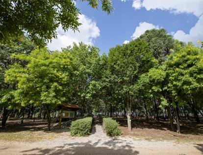 Bosque Arboreto